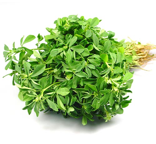 Fenugreek-Methi