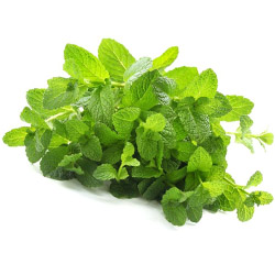 Mint Leaves-Pudina